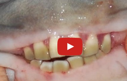 Fish with HUMAN TEETH caught in Russia – Atlnightspots
